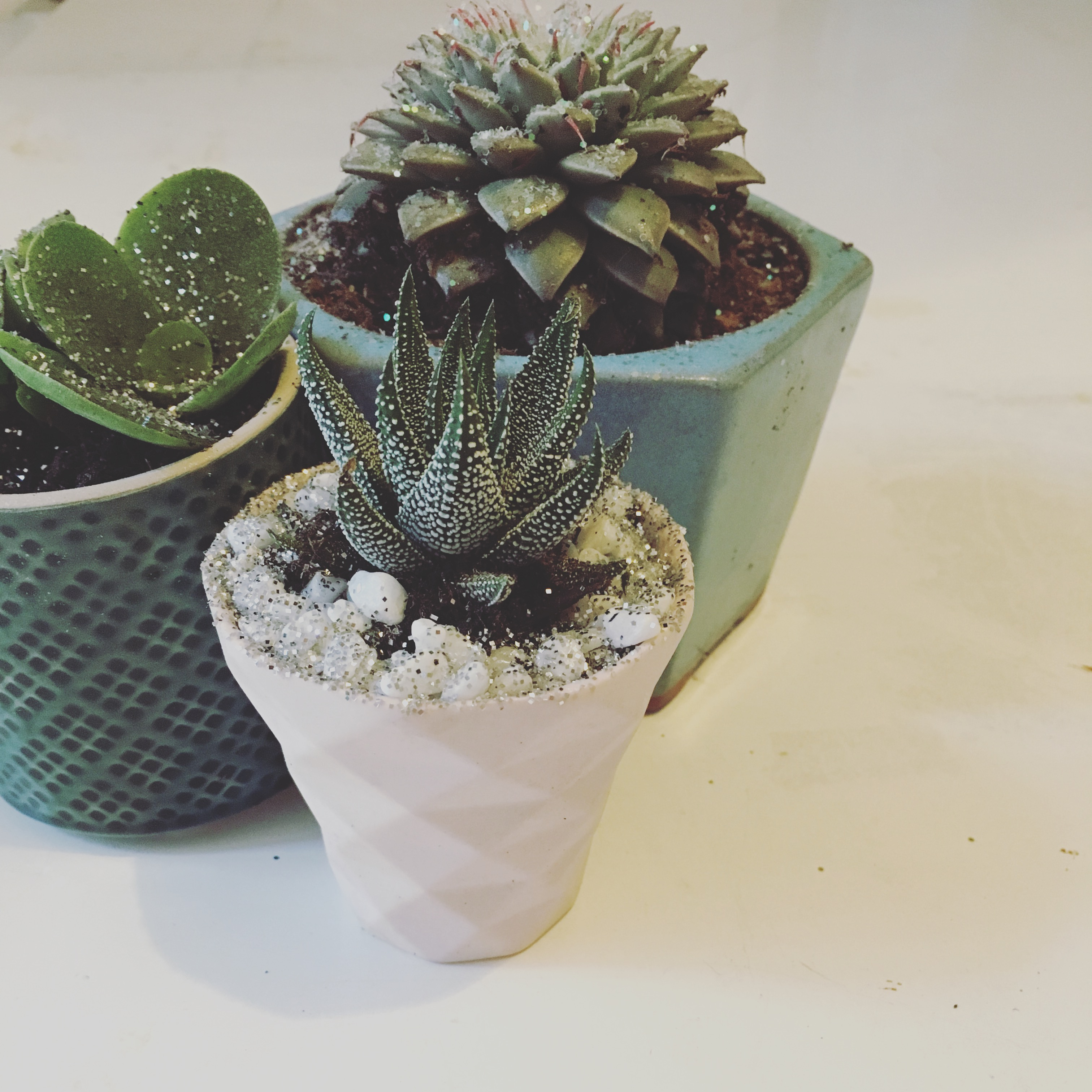 3 succulents potted correctly